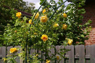 ТОП-20 растений цветущих в июле: что стоит выбрать для сада, огорода или клумбы? | (Фото & Видео) +Отзывы