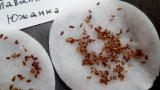 Стратификация семян в домашних условиях: как правильно просвети процедуру в холодильнике   ТОП-5 Способов   (Фото & Видео)+Отзывы