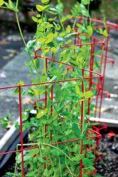 Шпалера: надежная опора для вьющихся стеблей (огурцов, томатов, малины, клематиса и других растений). Оригинальные идеи и чертежи (110+ Фото & Видео) +Отзывы
