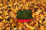 Уход за газоном осенью – гарантия его весеннего обновления от Подмосковья до Сибири
