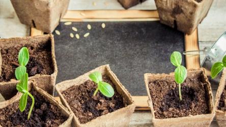 Посадка растений в марте на рассаду: таблица по дням и культурам + лунный календарь на март | (Фото & Видео)+Отзывы