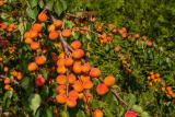 Абрикос: выращивание из косточки в домашних условиях, особенности для средней полосы и Сибири   (Фото & Видео) +Отзывы